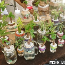 Indoor planting is a breeze with The Green House Project.